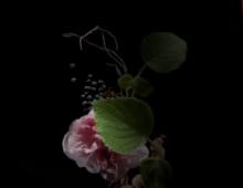 Fragrance Experts – Guerlain